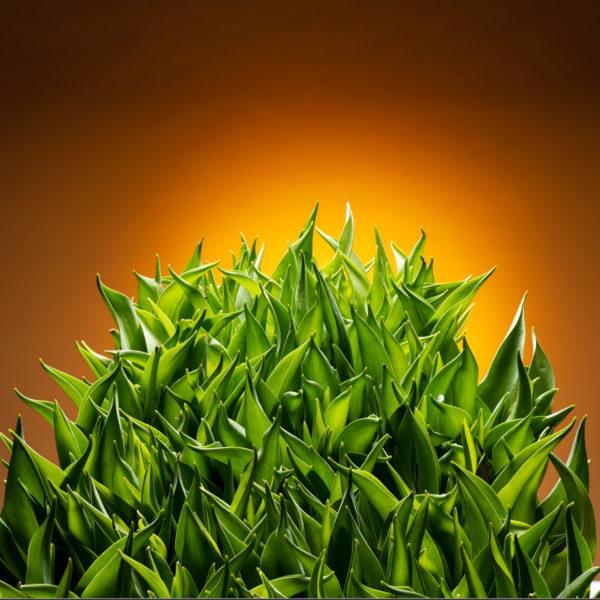Het kwetsbare blad van de tulp heeft een uitbundig bladobject opgeleverd. Het lijkt te juichen, zelfs zonder de bloemen van de tulp is het een kleurrijke verschijning. Meester binder en arrangeur Ben Clevers met dit object weer een opvallende creatie neergezet.