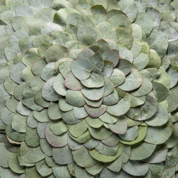 Ben Clevers, meesterbinder en arrangeur van grote bloemwerken heeft van het blad van verschillende planten bladobjecten gemaakt. De zachte blauwgroene kleur van dit blad heeft een vriendelijke uitstraling. Het object is rond, dit is een detail ervan.