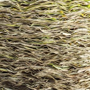 Een voornaam object zou ik het willen noemen. Het bladobject van de bladeren van de Aristolochia staat op een robuuste schaal op een klassieke voet. Het licht krullend blad geeft een rustige structuur en het object laat in dit zij aanzicht een heel ander beeld zien dan het bovenaanzicht. Ben Clevers, meester binder en arrangeur heeft het ontwerp voor dit object gemaakt.