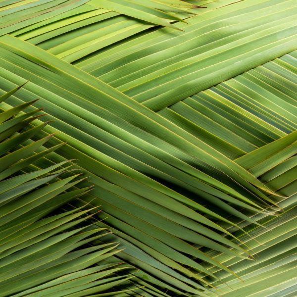 Het langwerpige blad van de Typha laat zich mooi vlechten zoals bij dit bladobject, De blauwgroene kleur in het blad wordt versterkt door de schaal van Mobach waarin het object is gemaakt.