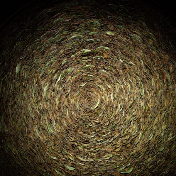 Geduld is nodig om deze gedroogde variant van het bladobject van de Gaultheria te krijgen. Het cirkelvormige object met een rijke schakering van bruintinten vraagt om vaker bekeken te worden.