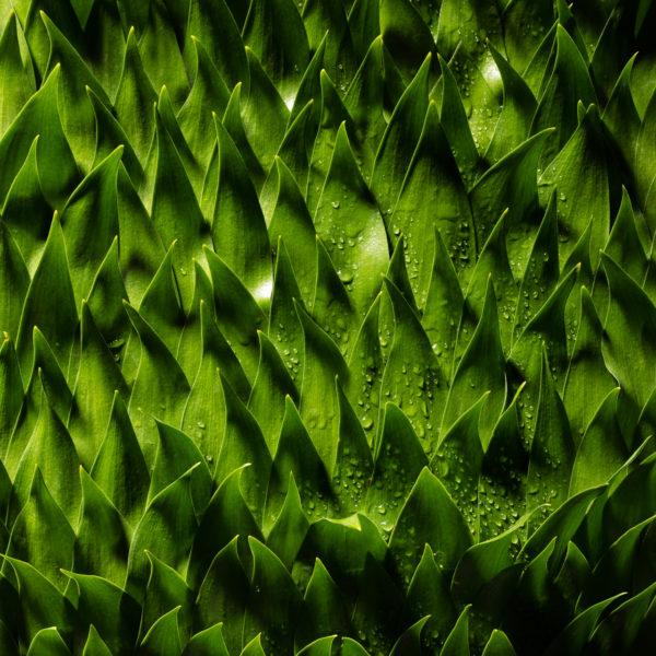 Een krachtig blad, het blad van de Ruscus, het bladobject laat een hele nieuwe structuur zien door het geschubt plaatsen van deze bladeren. Ben Clevers meester binder en arrangeur heeft dit object voor zijn boek Leaves gemaakt.