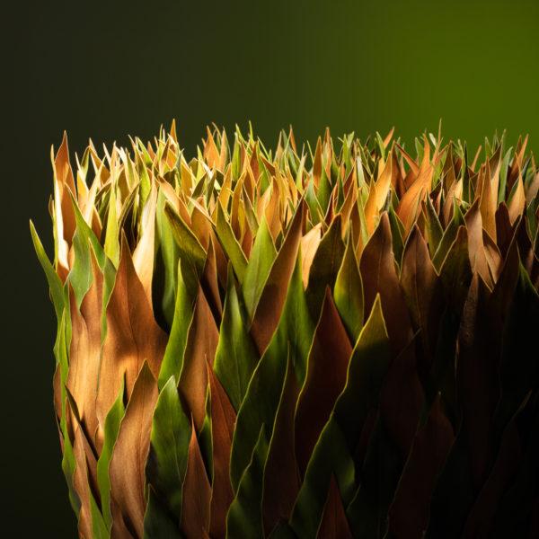 Met dit bladobject lijkt Ben Clevers, meester bloembinder en arrangeur buiten de lijntjes te kleuren. Het blad is om de basis gemonteerd door plaktechnieken. De bovenkant van het object lijkt te juichen naar het licht.