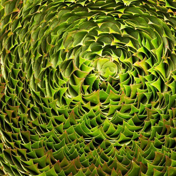 Het blad van de Photinia is puntig en gekarteld en geeft gecentreerd en in detail het beeld dat dit zo zou kunnen groeien, bij het hele object is het duidelijk dat het gaat om een bewust gekozen vorm. Ben Clevers, meester bloemblader en arrangeur heeft dit concept bewust gekozen om de structuur en de kleur van het blad goed te laten zien.