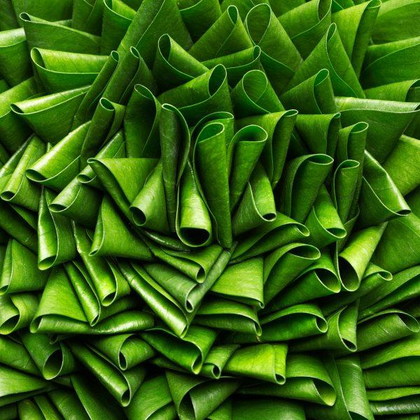 Dubbelgevouwen blad tot driehoeken verwerkt in een bladobject ontworpen en gemaakt door Ben Clevers. Ben is meester bloembinder en arrangeur. Het bladobject is opgemaakt in een schaal van Mobach.
