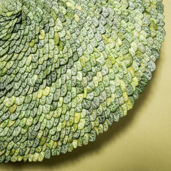Het kleine en tere blad van de Ceropegia vraagt om een zorgvuldige behandeling. De blaadjes zijn snel beschadigd en verkleuren ook makkelijk. Het cirkelvormige object geeft een mooie schakering van groentinten.