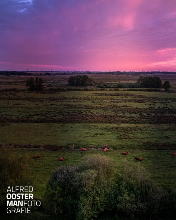 Een uitzicht in de noordelijke richting. Gezien vanaf de uitkijktoren in 'het Beeld' in waterbergingsgebied 'de Onlanden' Vroeg in de ochtend levert dat een bijzonder kleurenspel op.