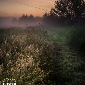 Net buiten de Kleibos loop je zo de mist in , een sprookjesachtige wereld waar beperkt zicht is. De mist verzacht het licht en de kleuren, alles lijkt pastel. Een mooi begin van de dag.