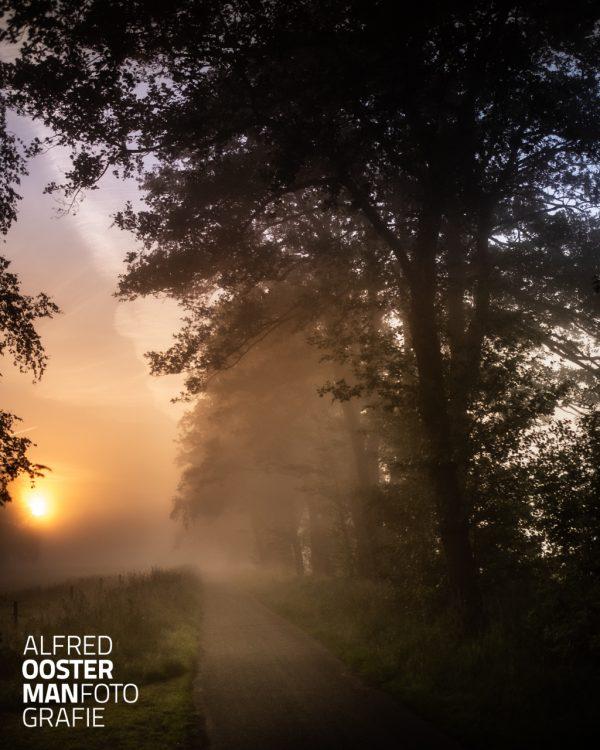 De mist hangt tussen de bomen in de Onlanden. De zon wordt door de mistflarden veranderd in een diffuus licht.