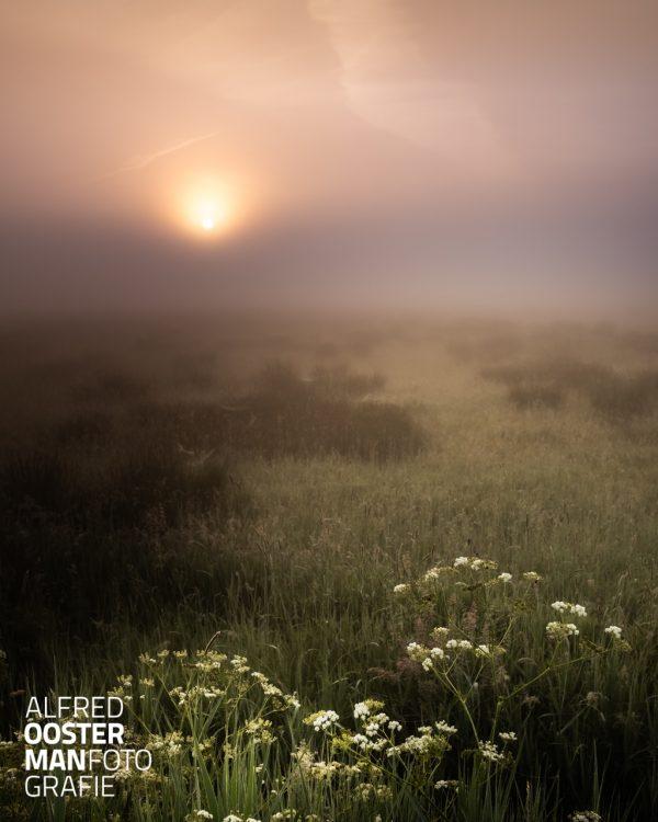 Een beetje mist en een opkomende zon. Het licht van de zon wordt door de mist diffuus over het landschap van de Onlanden verstrooid. Pasteltinten gaan in elkaar over van zacht groen naar geel en roze. In de voorgrond verwelkomen de paardebloemen enthousiast deze nieuwe dag.